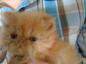 cute kitten picture - cute ginger kitten - cute redhead kitten